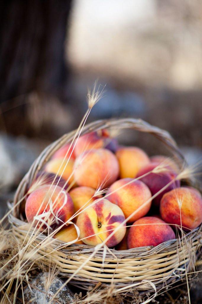 Reportajes fotográficos agricultura - Fruta de hueso en Murcia, Melocotón