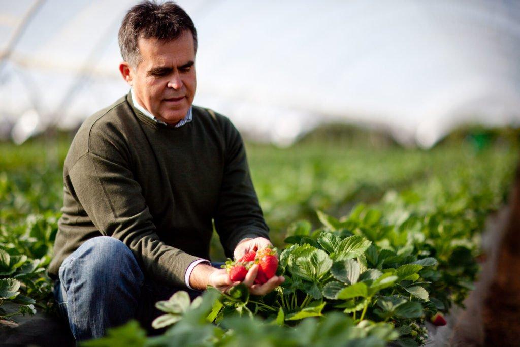 Reportajes fotográficos agricultura – Fresa en Huelva